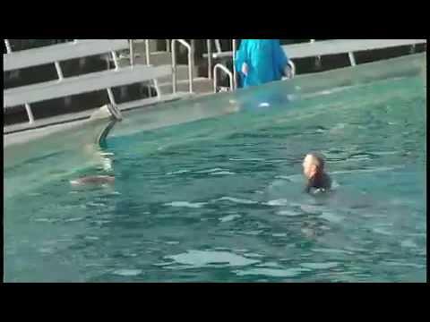 Trainer killed seaworld video