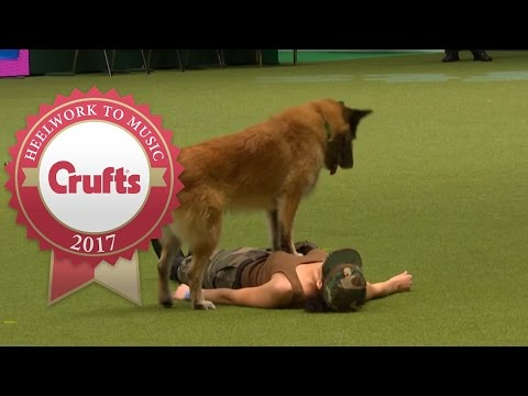 Heelwork To Music - International Freestyle Competition Part 1/3 | Crufts 2017