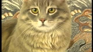 Siberian cat Gordei (Сибирский кот Гордей) 2. Creator of the Dynasty