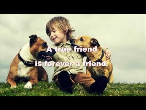 Best Friend Quotes For You