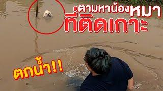 ภารกิจตามหาน้องหมาถูกทิ้ง ที่ติดเกาะ จนตกน้ำ!! จะเจอน้องมั้ย!? (EP2 ) - พี่วาฬ