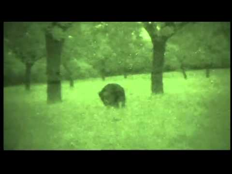 Hog Hunting .44 Magnum Tracer Rounds Night Vision