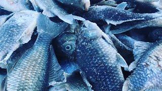 Приехали на рыбалку за окунем а тут НЕОЖИДАННЫЙ ПОВОРОТ СМОТРИТЕ КОГО МЫ НАШЛИ НА ЭТОЙ РЕЧКЕ