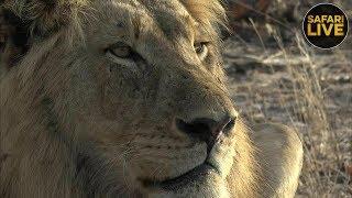 safariLIVE - Sunrise Safari - October 7, 2018 Part 2