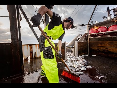 Fishing For Talent: An Apprenticeship For The Future Of Commercial Fishing | WorkingNation