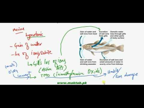 FSc Biology Book2, CH 15, LEC 4: Osmoregulation In Animals