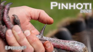 CONFRONTATIONS while HUNTING PUBLIC LAND | SHARP SPURRED OSCEOLA GOBBLER | Pinhoti 2020