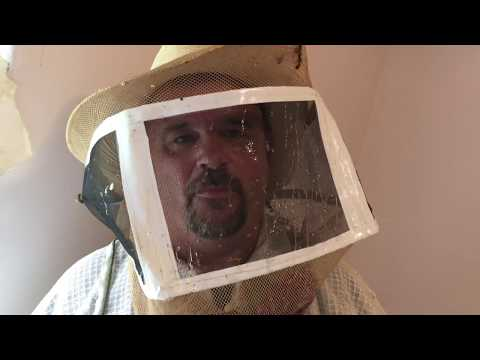 Colony of bees — and  pounds of honey — found living inside St. John's house