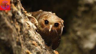 Oilbird - Animal of the Week