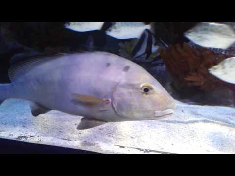 Aquarium Istanbul Forum Part 3