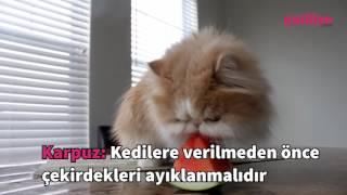 Kedilerin Severek Yiyebileceği 7 Besleyici Meyve-Sebze