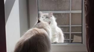 Кот просится домой Смешной кот