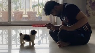 It's My First day | A day in my Life with Maa bujji shihtzu puppy| DIML | Vlog | Sushma Kiron