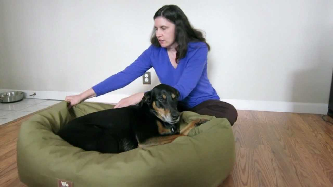 West Paw Bumper Bed Review Youtube