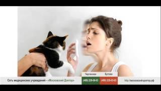 Аллергическая реакция на кошек