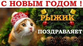 Поёт рыжий кот. Новогодняя песня - В лесу родилась елочка. Видео клип кавер ремикс / Singing cat 1