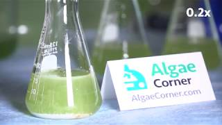 Algae Corner: The Power of Peroxide with PAK 27