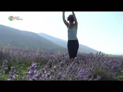 Lavender Yoga Practice at Rose Valley