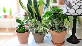 햇빛없이 그늘에서 잘 자라는 식물 15가지