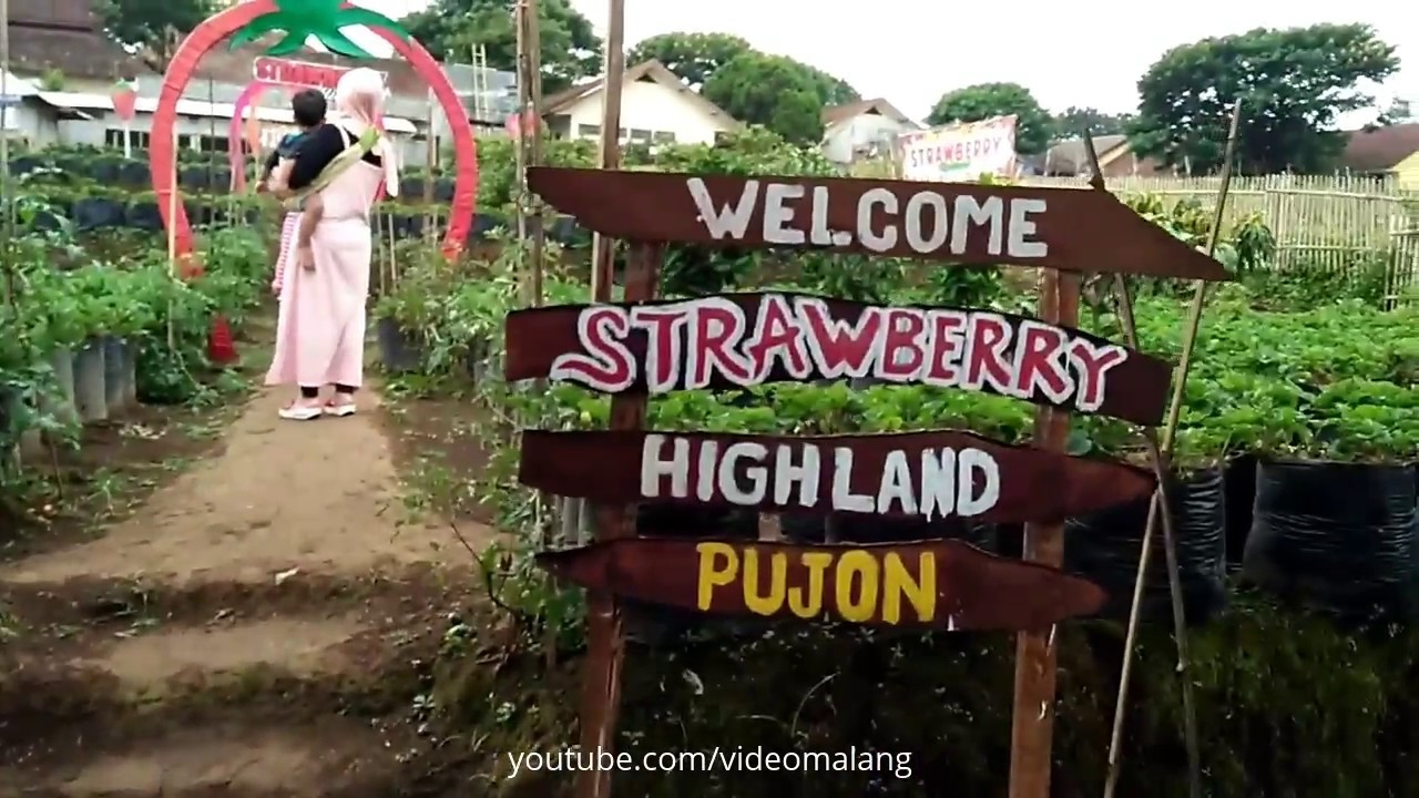 Kebun Strawberry Pujon Malang
