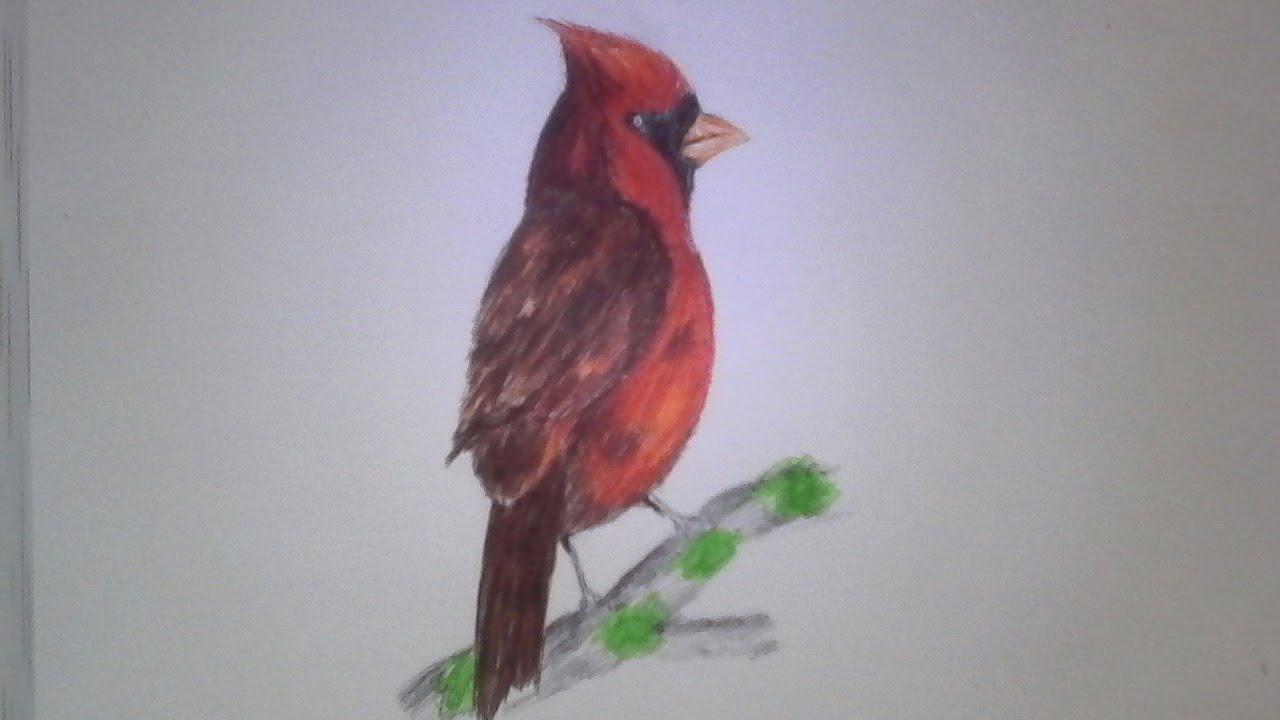 Como dibujar una ave cardenal a lapicero!! - YouTube