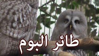 الحيوانات - طائر البوم