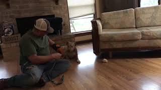 Fear biting. Fear based aggression case. Corpus Christi Dog Training