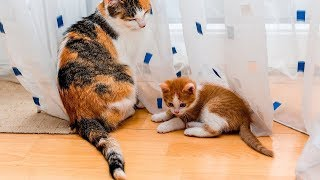 Funny Dogs and Cats - Cats Playing With Each Others Tails | WORLD PET TV