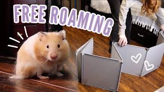 How to Free Roam your Hamster