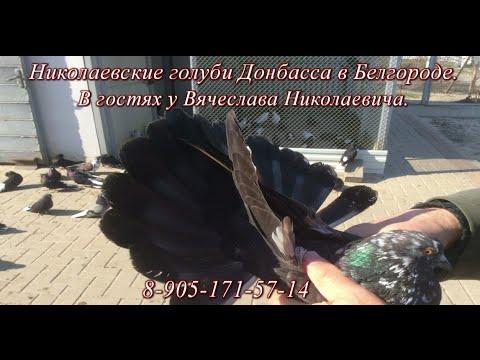 Николаевские голуби Донбасса в Белгороде .