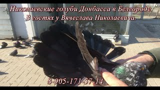 Николаевские голуби Донбасса в Белгороде (В гостях у Вячеслава Николаевича)