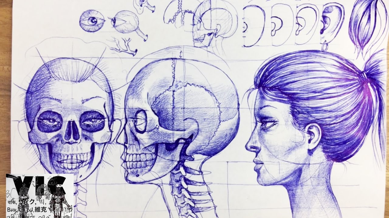 How To Draw A Skull Based On A Face And Anatomic Knoweledge Step By Step With A Ballpoint Pen