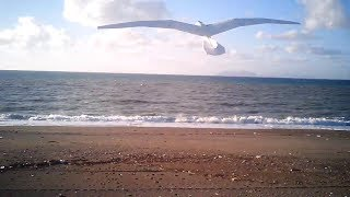 SLOPE SOARING AT THE BEACH 2