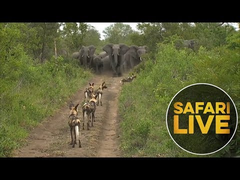 Monday Madness: A pack of wild dogs is chased off by elephants!