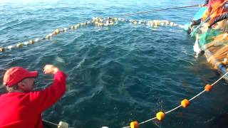 Pesca de las palometas en LONCURA