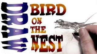 How to Draw a Bird on the Nest (Advanced)