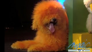 ERMAKOV  Dogs Academy (Dogs Training)  The world greatest Cabaret
