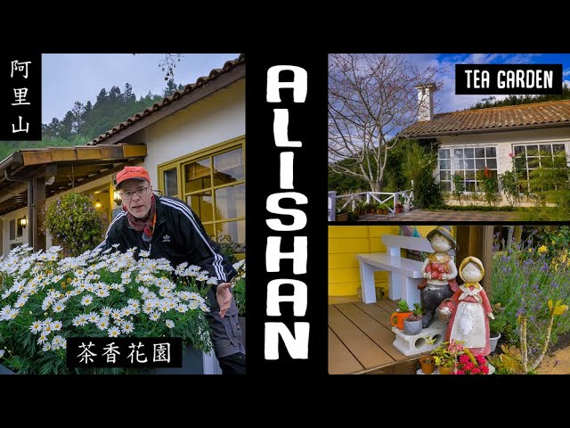 ALISHAN Tea Garden Homestay (阿里山茶香花園民宿)