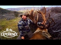 Hunting New Zealand Red Stags, Tahr, Chamois and more