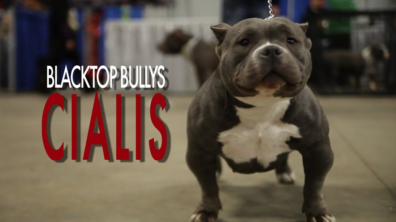 exotic bully cialis youtube