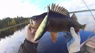Рыбалка на озере в августе Ловим трофейного окуня и щуку