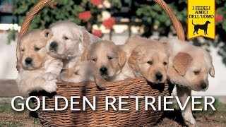 GOLDEN RETRIEVER trailer documentario