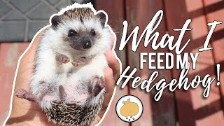 What I Feed My HEDGEHOG! 🦔 | Hedgehog Diet/Care 2018