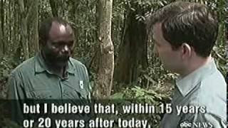 Bonobo chimps on nightline having sex aka conflict resolution!