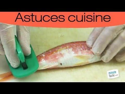 Comment lever les filets de poisson youtube - Comment cuisiner des filets de maquereaux ...