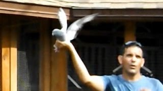 Pigeon Racing - A difficult Competition