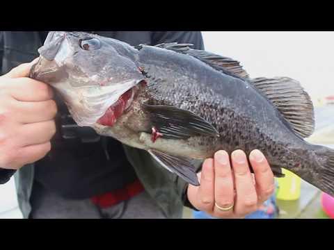 Rock Fish Fishing In Coos Bay Oregon