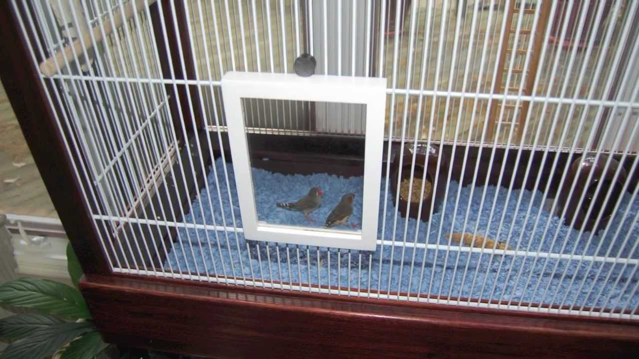 How to make a bird cage (Finch Flight Cage) from closet shelving and wooden  frames - YouTube