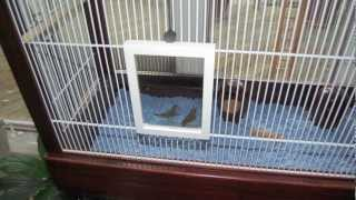 How To Make A Bird Cage (finch Flight Cage) From Closet Shelving And Wooden Frames