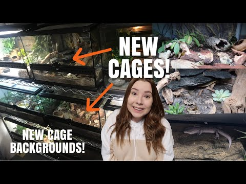 New Cages In The Reptile Room! | More Exo Terra's + New Backgrounds!